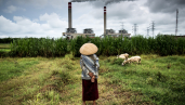 A shepherdess watches over her flock of sheep that graze near a coal power plant in Jepara, Central Java