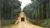 Road through plantation. By Milieudefensie/Colin Nicholas