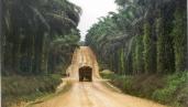Road through plantation. By Milieudefensie/Colin Nicholas